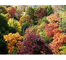 Fall Tree Top Mix Photographic Print