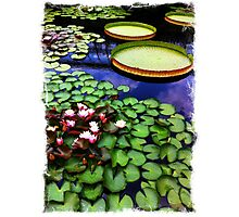 Leap Frog Pad Photographic Print