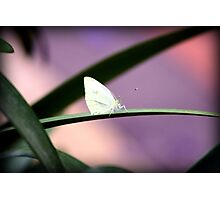 fairy wings Photographic Print