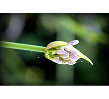 the birth of beauty Photographic Print
