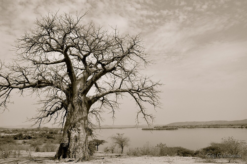 Baobab with a view by Gigi Guimbeau
