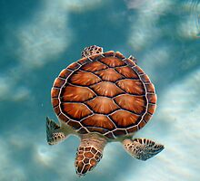 Turtle Turtle by Keri Harrish