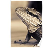 Willard the lizard.  Poster