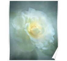 Camellia In The Mist Poster