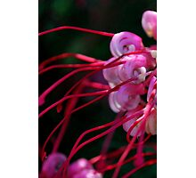 Grevillea at Elmore Photographic Print