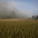 Mist over the rice paddy by Martinovi