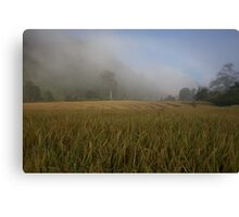 Mist over the rice paddy Canvas Print