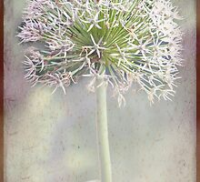 Botanical  by Margi