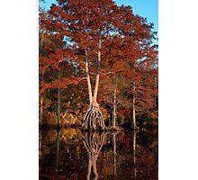 Redhead on stilts Photographic Print
