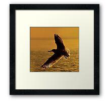 Ring-billed Gull Silhouette. Framed Print