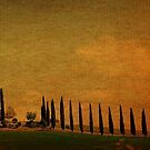 Marching in a Row-Tuscany by Deborah Downes