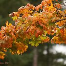 Autumn beauty by Rainydayphotos