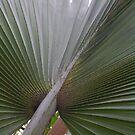 Fan palm 2  by abbycat