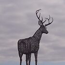 The Stag by biddumy