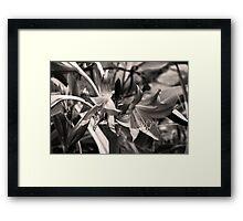 Ants Framed Print