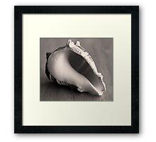 Little Conch Framed Print