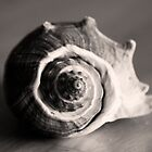 Spiral Shell by Jay Reed