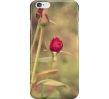 Rose Delight-iPhone iPhone Case/Skin