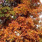 Fall colors by Ana Belaj