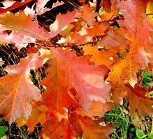 Autumn  leaves by Ana Belaj