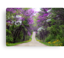 Redbuds in Bloom Canvas Print
