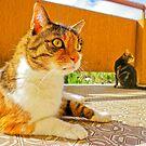 balcon KatS by BellatrixBlack