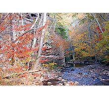 Beaverdam Creek Photographic Print