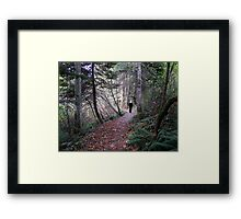 Woodland Trail Framed Print