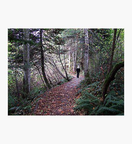 Woodland Trail Photographic Print