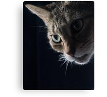 Looking Around Canvas Print