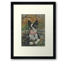 Boston Terrier in the Park Framed Print