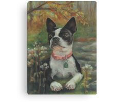 Boston Terrier in the Park Canvas Print
