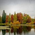 Bedgebury Pano by Bob Culshaw