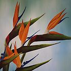 Birds of Paradise Take Flight by Jan Vinclair