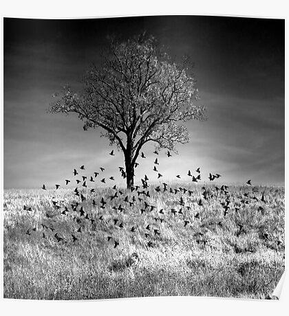Birds Lifting Poster