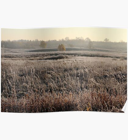 First frost in grassland at autumn time Poster