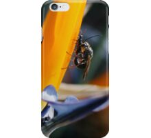 Insects in Prospect iPhone Case/Skin