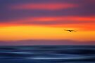 Gliding out to Sea by David Alexander Elder