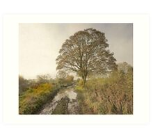 A Misty Autumn Morning In Yorkshire Art Print