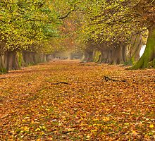 Autumns Avenue  by CJTill