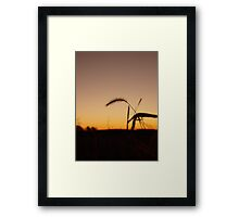 Wheat Stalk at Sunrise Framed Print