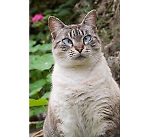 Cross-eyed cat Photographic Print