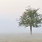 Lonely Tree in the Fog by Kasia Nowak