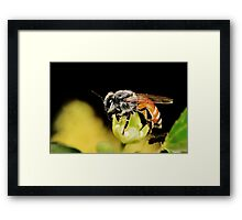 Bee smart ..have it all Framed Print