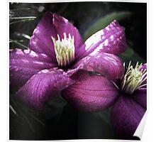 Melancholy Garden I ~ Floral Photography Poster