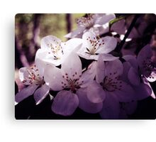 Cherry Blossom ~ Floral Photography Canvas Print