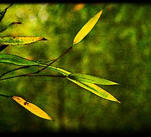 Bamboo Leaves Sunbathing by Lynnette Peizer