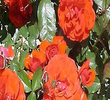 Orange Tea Roses... by Photos55