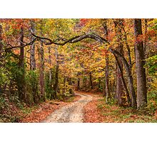 Tangled Limbs and Fallen Leaves Photographic Print