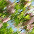 Spring by Kitsmumma